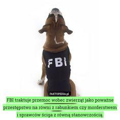Faktopedia CDIV - ile wart jest rynek narkotykowy w Kolumbii - Joe Monster