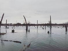 "Sam Calhoun on Instagram: ""Late afternoon paddle through Cooper Marsh downstream of Lady Ann Lake in Huntsville, AL!  #explore #getoutstayout  #optoutside #getoutide…"""