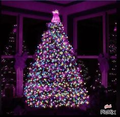 Purple Christmas discovered by Debra Hollingsworth Purple Christmas Tree, Beautiful Christmas Trees, Noel Christmas, Xmas Tree, All Things Christmas, Christmas Lights, Vintage Christmas, Christmas Crafts, Christmas Decorations