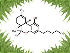 In case you are growing marijuana to get THC or CBD, here are some top strains.