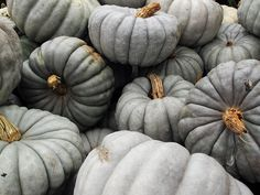 gray pumpkins.