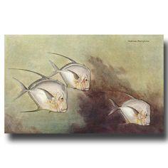 Antique Fish Art, Fish Print, Vintage White Moon Fish (Opah Fish - 60 to 200 Pounds!)  No. 197