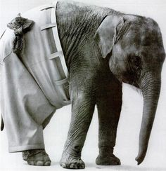 oh my sweet lord, give me an elephant in trousers.