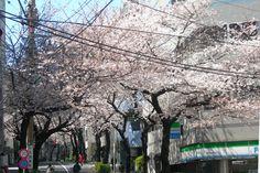 大塚 桜 - Google 検索
