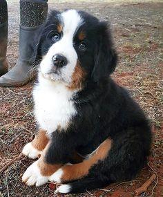 #pup #puppy #pupies