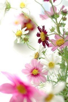 Children: flowers