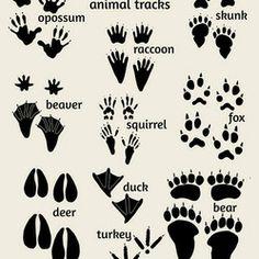 Nursery Art, Woodland Animals - Woodland nursery art, Field Guide to Animal Tracks poster. Features footprints of deer, bear, fox, and more....