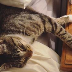 #cats #cute #animals