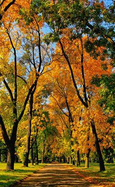 Autumn alley, Lodz | Poland