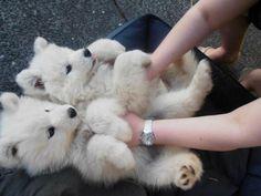 Awwww they look like baby bears!!!