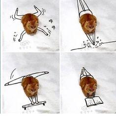 #gingercatsrule #funnycats #funnycatsofinstagram #orangecats #orangekitty #marmaladecat #fiftyshadesginger #gingerkitty Funny Animal Jokes, Funny Cat Memes, Funny Animal Pictures, Cute Funny Animals, Animal Memes, Cute Baby Animals, Funny Cute, Animal Pics, Memes Humor