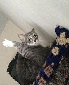 ネコの魅力は何と言ってもミステリアスなところなんですが、ミステリアスを通り越して変テコな行動をクールな表情でや…
