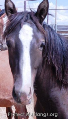 """Take Action to Stop the Killing, Slaughter & Sterilization!  Today the Wild Horse & Burro Advisory Board for the Bureau of Land Management voted to kill all """"unadoptable"""" wild horses in long term holding. We will not tolerate this cruelty. They belong in the wild. It's time to protest and fight in the courts! Please DONATE & Share!"""