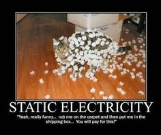 Funny pictures about Static electricity. Oh, and cool pics about Static electricity. Also, Static electricity photos. Crazy Cat Lady, Crazy Cats, Silly Cats, Funny Kitties, Adorable Kittens, Dumb Cats, Stupid Cat, Really Funny, Funny Cute