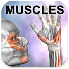 Today's FREE Android App: Learn Muscles: Anatomy ($2.99 Value)! Valid May 30, 2014 only or while supplies last.