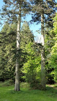 Mabie forest Dog Walking, Walks, Dogs, Nature, Plants, Pet Dogs, Doggies, Flora, Plant
