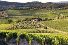 Nipozzano Vineyards