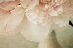 Pink Peony Photograph Peony Still Life Floral Art Print