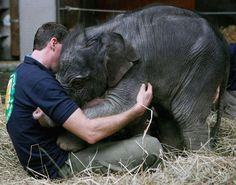 Baby Asian elephant greets her keeper with a hug at Munich's Hellabrunn Zoo.