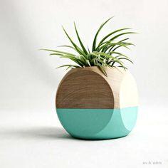 Air Plants, Indoor Plants, Potted Plants, Terrarium Cactus, Decoration Plante, Deco Originale, Deco Design, Ikebana, Houseplants