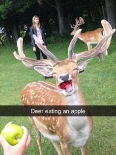 40 Absolutely Hilarious Animal Pictures -