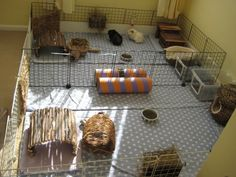This is where 4 of my 8 piggies live. Each of the 2 pairs has a 3 X 5 C and C cage with 2 X 5 size cage liners on the floor. There are small liners underneath the wooden log cabins. I have made litter trays out of plastic containers, but only one is used! Diy Guinea Pig Cage, Guinea Pig House, Uni Dorm, C&c Cage, Skinny Pig, Guniea Pig, Animal Crafts, Pet Enclosures, Pet Craft
