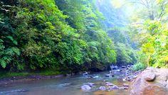 Wilde Bäche und tropische Wälder
