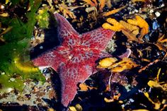 A fun day at the beach looking at all the wonderful sea life.  Vancouver island ..BC canada