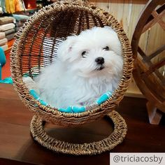 We can't think of a better cure for a Monday than seeing this fuzzy ball of cuteness using our Hand-Woven Fruitasan Fruit Holder as a mini #swingasan! Photo by @triciacosby. #dogsofinstagram #pier1love