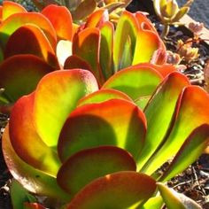 indigenous plants south africa - Google Search