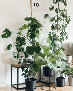 Want a bit of that lush green urban jungle vibe in your home? Then discover the definitive guide to displaying house plants. Indoor Garden, Indoor Plants, Belle Plante, Decoration Plante, Inside Plants, Plants Are Friends, Office Plants, Foliage Plants, Green Life