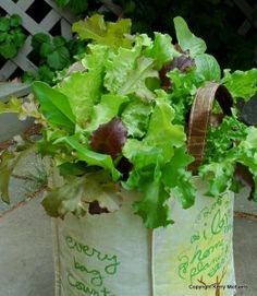 Grow lettuce in a bag! One of the fun container gardening tips from Kerry Michaels of containergardenin...