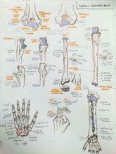 biology apuntes The Oxford Handbook of Medblr minuiko: Forearm - Radiology Student, Anatomy Bones, Upper Limb Anatomy, Medicine Notes, Nursing School Notes, Medical Anatomy, Human Anatomy And Physiology, School Study Tips, Anatomy Study