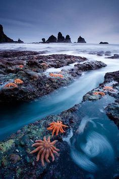 How many starfish can you see?  (Starfish colony in West Coast, New Zealand)