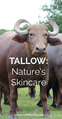 Using Tallow to soften your skin.  It is an amazing product.  Nature's Skincare!  Right now Buffalo Girl GrassFed Beauty is offering Oh Lardy readers 10% off her natural tallow skin care products!  Click here to get the coupon code!