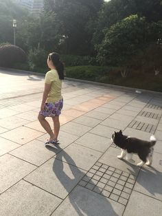 Don't leave me alone lah. Walk slow slow. #taro #alaskan #malamute