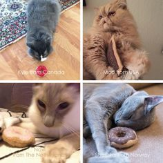 World Cat Day  Friends from around the world!
