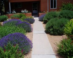 Easy Desert Landscaping Tips That Will Help You Design A Beautiful Yard Landscape Materials, Landscape Plans, Landscape Design, Desert Landscape, House Landscape, Tall Plants, Foliage Plants, Landscaping Plants, Landscaping Ideas