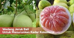 Wedang Jeruk Bali Untuk Menurunkan Kadar Kolesterol