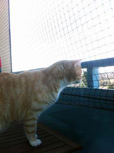 Für alle Balkonbesitzer: Ein #Katzennetz ist suuuuuper wichtig! Lest hier, wie wir es bei uns befestigt haben. #DIY