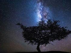 Amazing photos of giraffes under starry sky in Tanzania