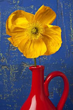 """Yellow Iceland Poppy in Red Pitcher ~ By Garry Gay"" Pinned for Red Yellow Blue - Color Inspiration"