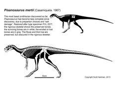 Pisanosaurus mertii -- Scott Hartman