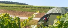 Pinned from the I Spy Camping blog:Wine-Tours-France