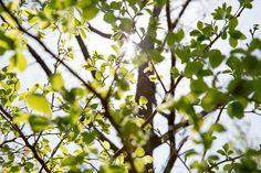 環境カウンセラー直伝!都会人にこそ知ってほしい。庭が育む、豊かな暮らし - キャンプ - Funmee!![ファンミ―]