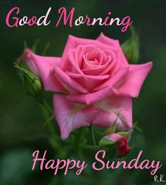 No sadness, No tiredness No irritate feelings Just happiness Just relaxed For everything fixed With great joy For you sister Be laughter Hahahahahaha Happy Sunday Images, Good Morning Sunday Images, Good Morning Friends Quotes, Sunday Morning Quotes, Happy Weekend Quotes, Sunday Wishes, Good Morning Happy Sunday, Blessed Sunday, Good Morning Flowers