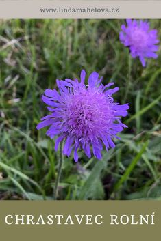 Natural Cures, Pharmacy, Herbalism, The Cure, Health Fitness, Creative, Nature, Flowers, Plants