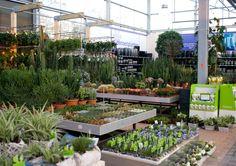Wevab Intratuin Elst     Wevab Intratuin Zuidplas Knecht Lux Green - Messancy  Knecht Intr... Garden Center Displays, Garden Centre, Flower Nursery, Farm Gardens, Cacti, Succulents, Gardening, Flowers, Plants