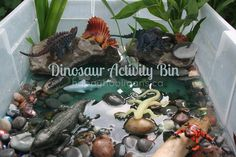 Dinosaur Activity Bin - with real water, rocks, and plants