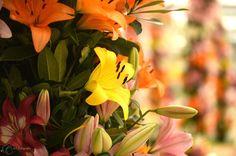 Bloemen 1 - RH-Fotografie